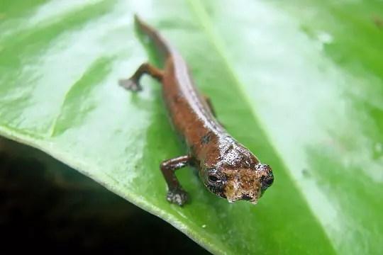 20 espèces rares et en danger