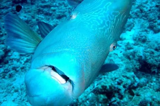 bora bora poissons