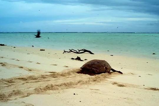 le départ de la tortue