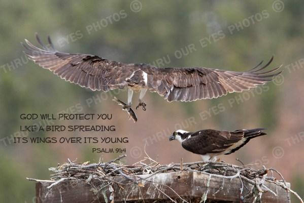 Birds - Linton Wildlife Photography