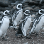 Now and Then - Linux Distributions