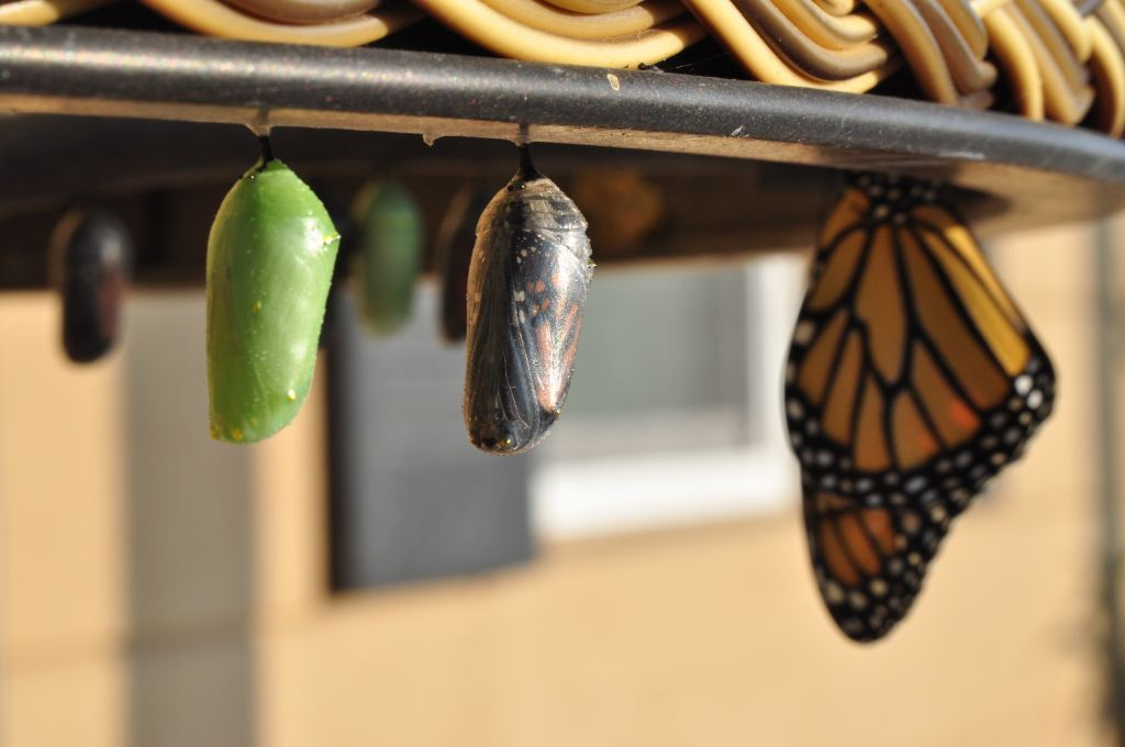 Butterfly and cocoons. Photo by Suzanne D Williams on Unsplash