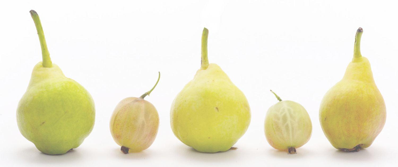 Lipoema Home Page - pears