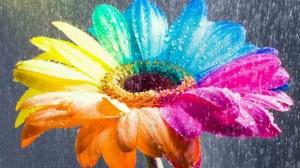 flowers-wallpaper-13