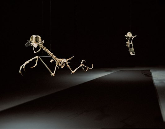 BipBip e Wyl E. Coyote - Geococcyx Animatus di Hyongkoo Lee