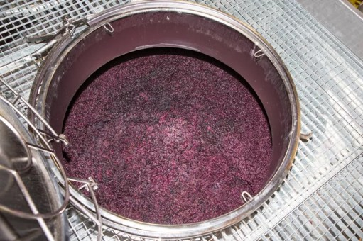 Grapes fermenting