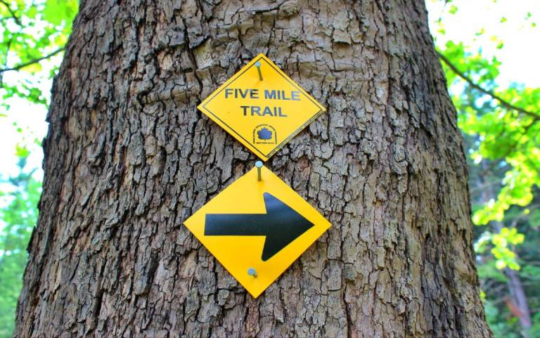yellow directional signs on tree for the Five Mile Trail pointing to the right.
