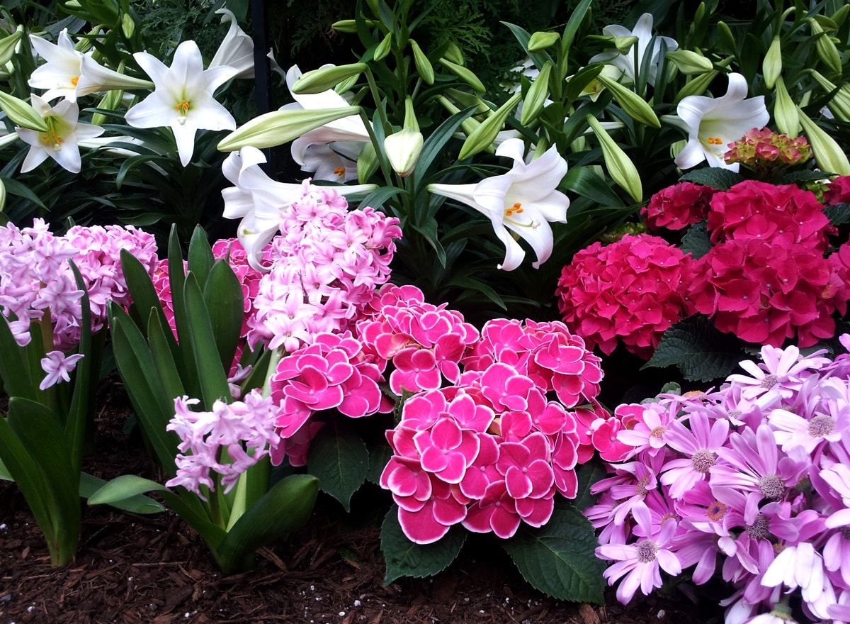 Beautiful white lilies and pink cyclamens
