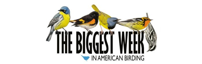 Biggest Week in Birding