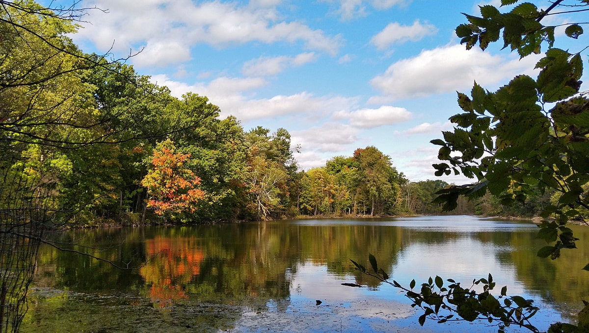 white fluffy clouds in the blue sky and green and red trees reflect in the calm waters of Fairlane Lake.