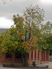 Balloon pumpkins hanging in a tree
