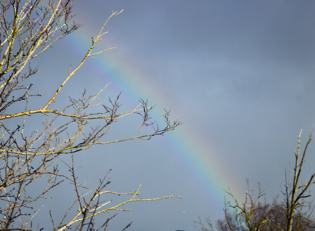 a green, yellow, and pink half-rainbow lights up the blue morning sky, bare tree branches frame the rainbow