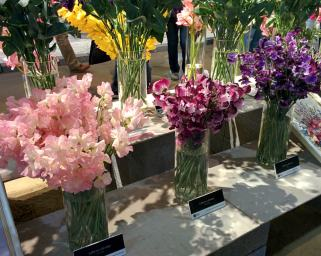 Lathryus (sweet pea) arrangements in pink, deep red, and purple