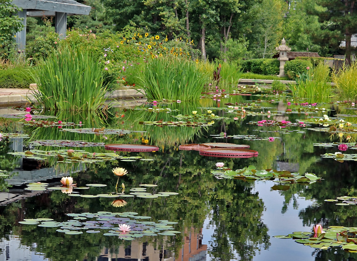 shallow pool filled with grasses and water lilies