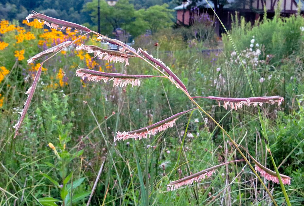 Late-summer flowers in bloom at Newburgh Pointe