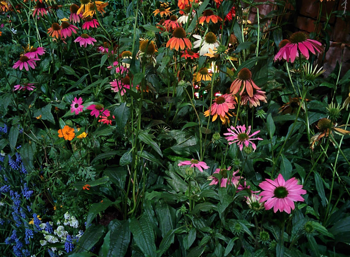 Photo Of The Week Bright Flowers To Brighten Up Snowy Days