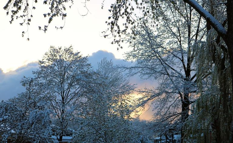 white snow-covered trees silhouetted against the morning sky with the golden sun rise.