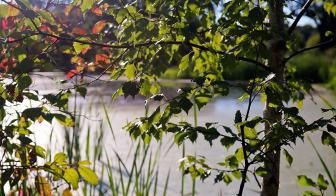 Reddish summer foilage surrounds Willow Pond