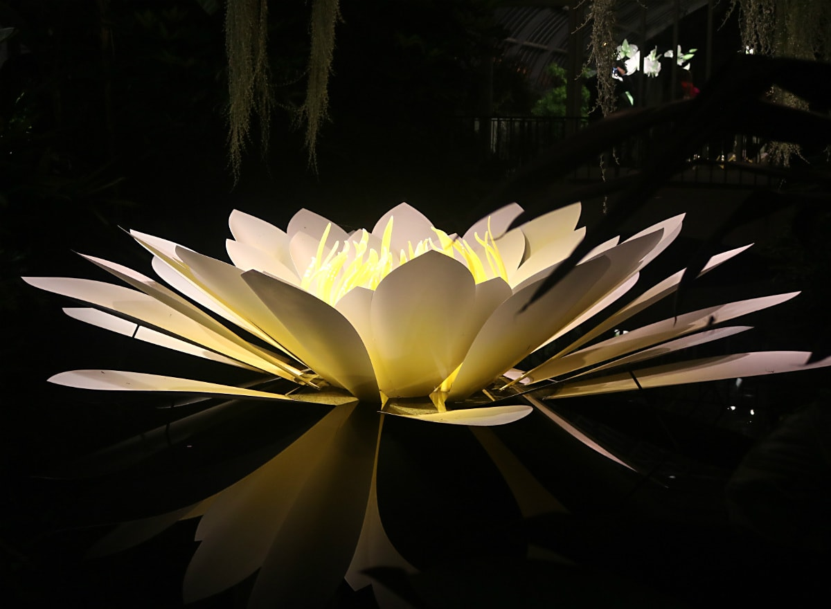 white day lily glass art in a pond with reflection below