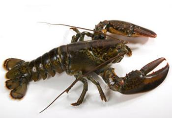 lobstercanada350