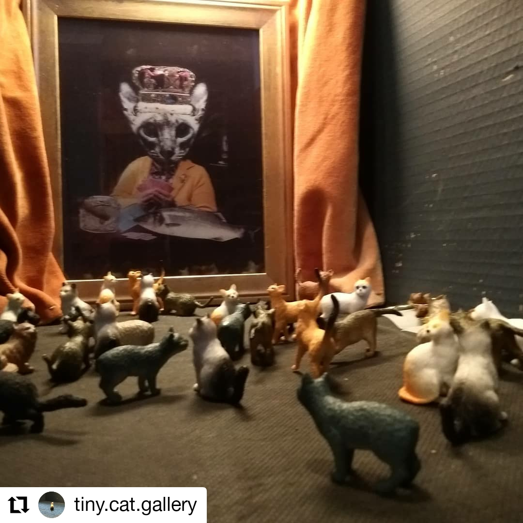 A Feast for Your Eyes Tiny Cat Gallery Susan Plover