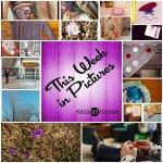 This Week in Pictures, Week 13, 2015