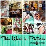 This Week in Pictures, Week 32, 2015