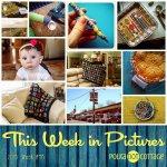 This Week in Pictures, Week 48, 2015