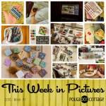 This Week in Pictures, Week 7, 2016