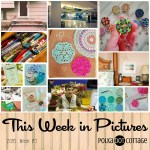 This Week in Pictures, Week 9, 2016