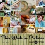 This Week in Pictures, Week 32, 2016