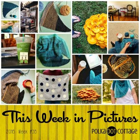 This Week in Pictures, Week 38, 2016