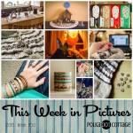 This Week in Pictures, Week 50, 2016