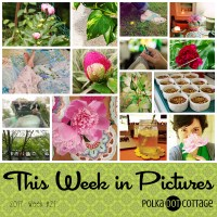 TWiP: Rainy Days and Peonies