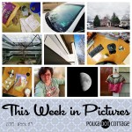 This Week in Pictures, Week 4, 2018