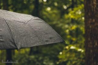 Great Swamp Wildlife Refuge wet umbrella
