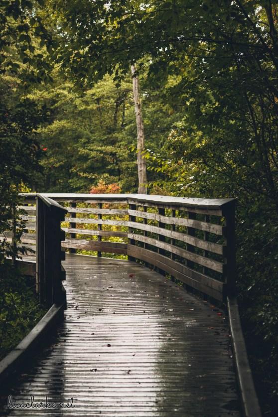Great Swamp Wildlife Refuge rainy boardwalk