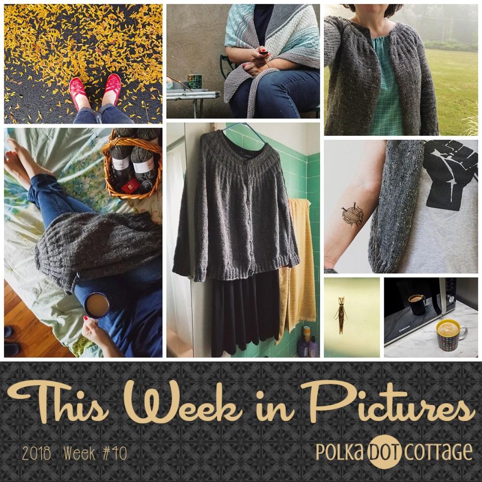 This Week in Pictures, Week 40, 2018