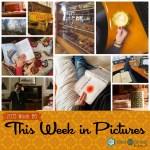 This Week in Pictures, Week 6, 2019