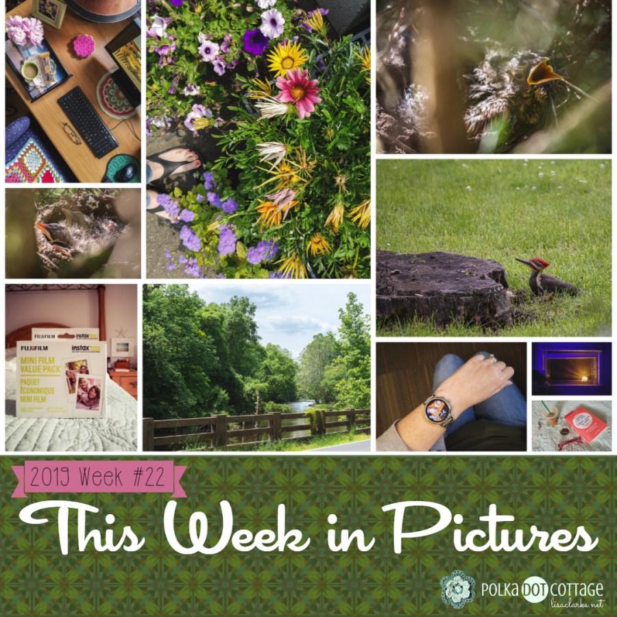 This Week in Pictures, Week23, 2019