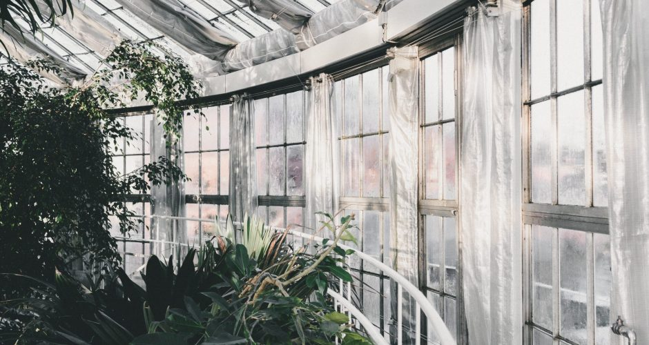 A Greenhouse with Dirt: Where Things Grow
