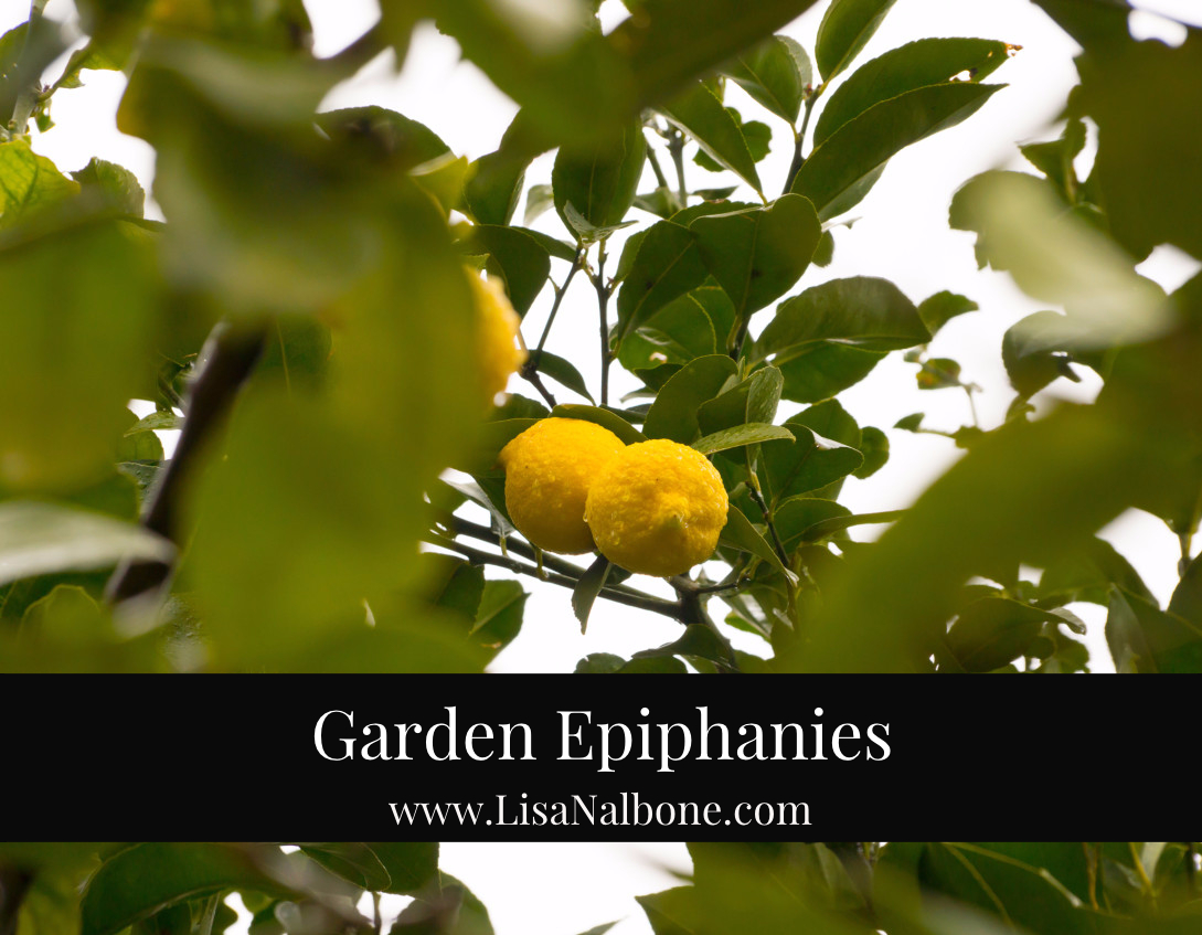 Garden Epiphanies at www.lisanalbone.com