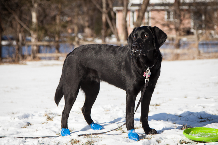 Cold Paws Warm Hearts  | CNIB Guide Dog Puppy