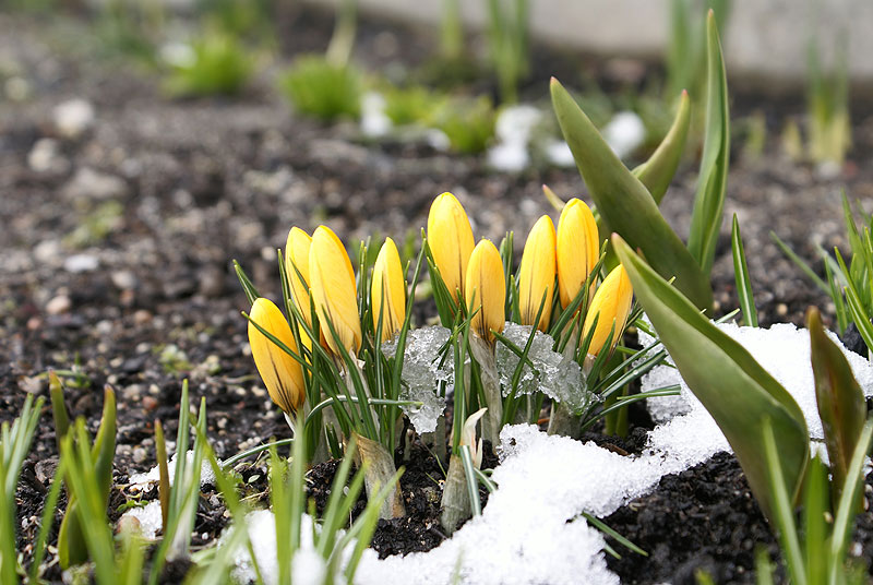 Flash Narrative: It Is Now Spring