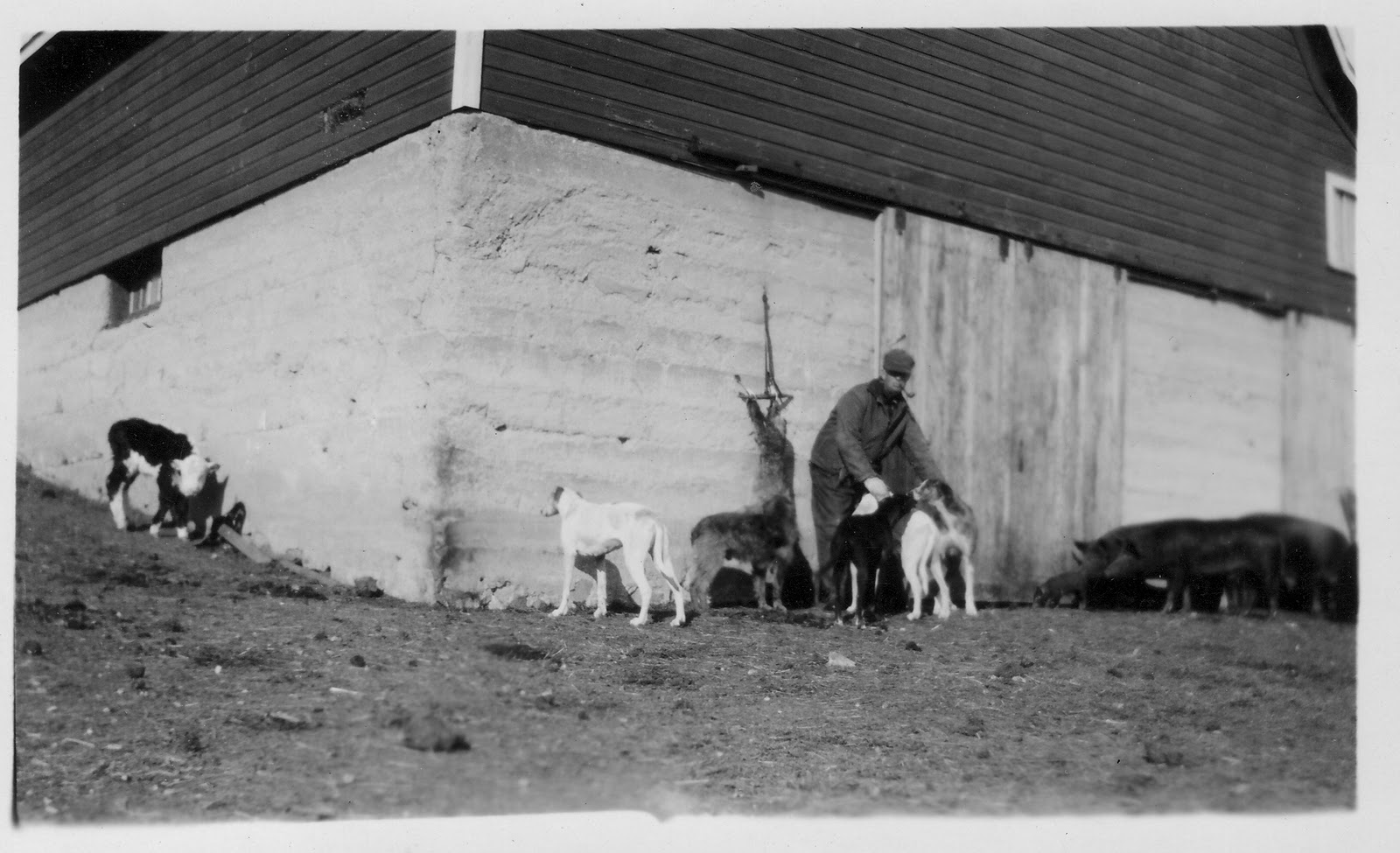 photo of Will Whitcher with Dogs, Calf, Coyote, Pigs