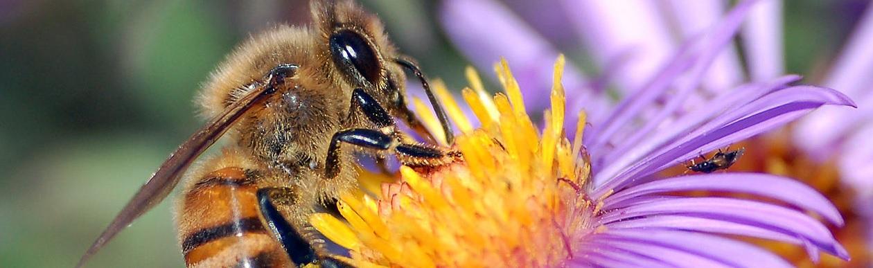 Cross-Pollinate for Creativity