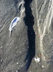 Beach Still Life photo by Lisa Lindahl