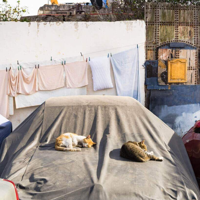 rabat-car-cats