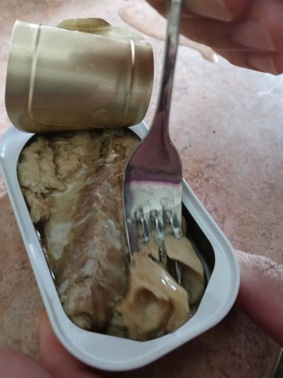 the mackerel experiment