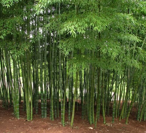 bamboo garden privacy screen 13 Attractive Ways To Add Privacy To Your Yard & Deck